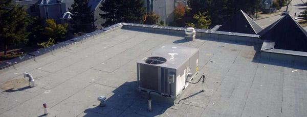 Bird-activity-on-roof